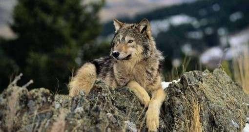 В Харьков пожаловали донбасские волки?