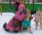 Харьковчане просят владельцев собак убирать за своими питомцами