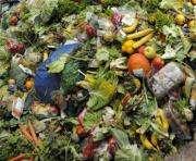 Во Франции супермаркетам запретили выбрасывать непроданные продукты
