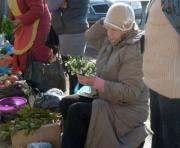 В Харькове за продажу диких тюльпанов можно схлопотать штраф
