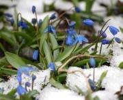 Погода в Украине: каким будет март