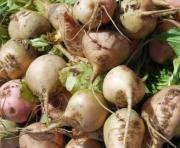 В Харьковской области увеличат посевы сахарной свеклы