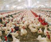 Что будет с ценами на яйца?