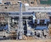 Greenpeace заявляет о мутантах возле Фукусимы-1