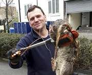В Лондоне на детской площадке обнаружили гигантскую крысу: фото-факт