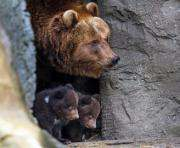 В харьковском зоопарке пытаются посчитать юных мишек