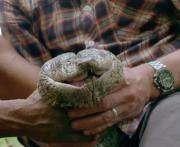 Cамую длинную змею в мире нашли в джунглях Амазонки