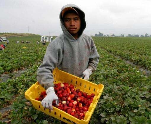 Украинцам станет сложнее трудоустроиться в Польше