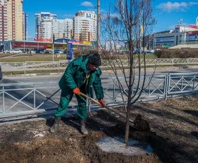 Где в Харькове будут высаживать деревья