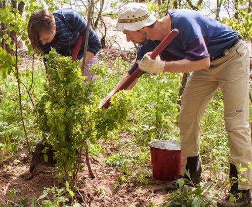 В Харькове высадят почти две тысячи деревьев