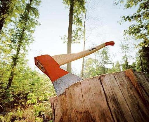 Кабмин запретил санитарную вырубку лесов в заповедных зонах