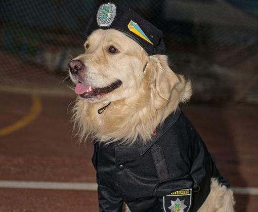 В Харькове прошел собачий фестиваль моды