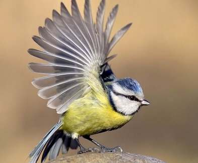 В Харьковском зоопарке отметят Всемирный день птиц