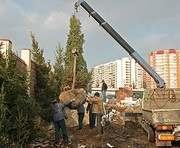 С начала весны в Харькове посадили три сотни деревьев