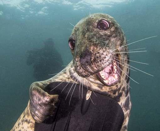 Фотограф получил золотую медаль за улыбающегося тюленя