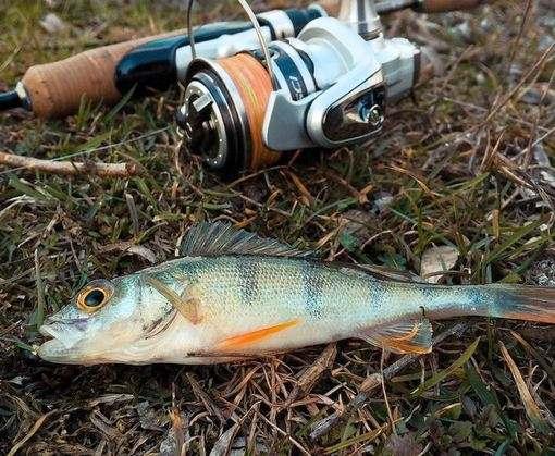 Как долго действует запрет на вылов рыбы