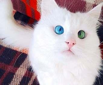 Назван самый красивый в мире кот