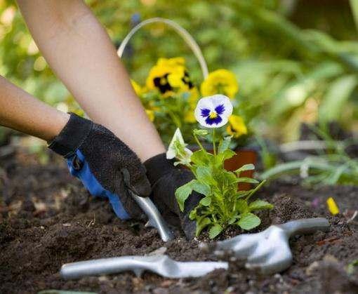 В Харькове начали высаживать цветы