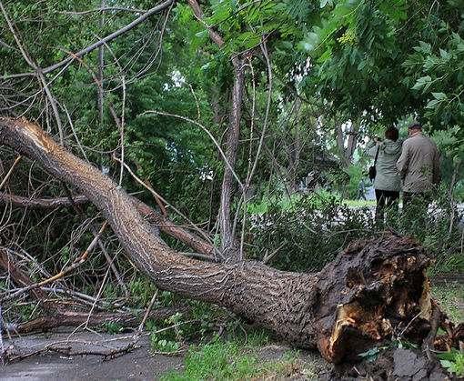 В центре Харькова на женщину упало дерево