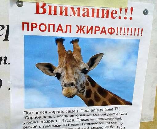 Пропавший в Харькове жираф нашелся