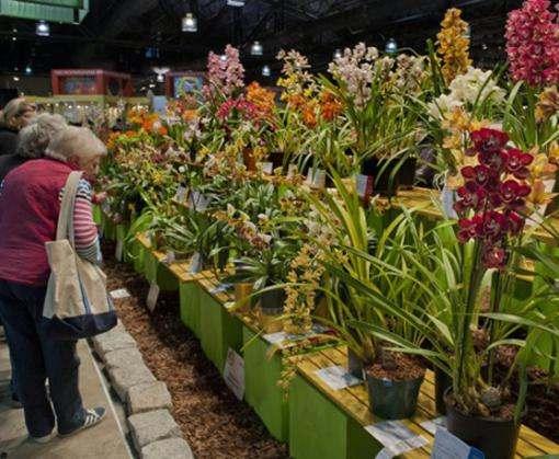 В харьковском саду Шевченко пройдет выставка цветов