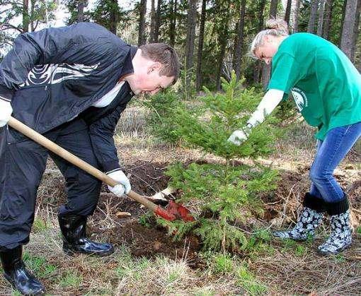 Лесники начали выращивать новогодние елки