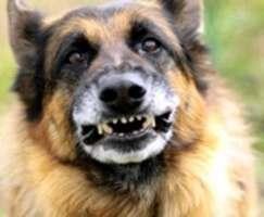 Нападение собак на ребенка: комментарий Харьковской мэрии