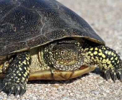 В Харьковском зоопарке состоится праздник «День черепахи»