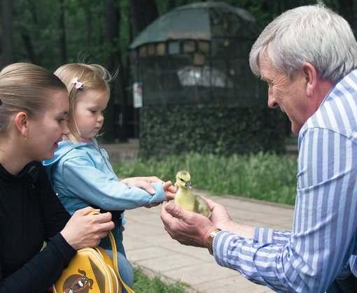 «Фельдман Экопарк» приютил четверых осиротевших лебедят