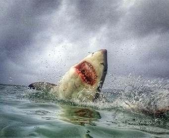 Ученые доказали наличие индивидуальности у акул