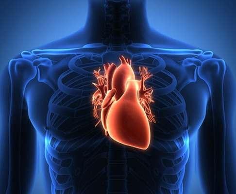 Как остановить старение сердца