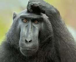 В Кении обезьяна оставила без электричества всю страну
