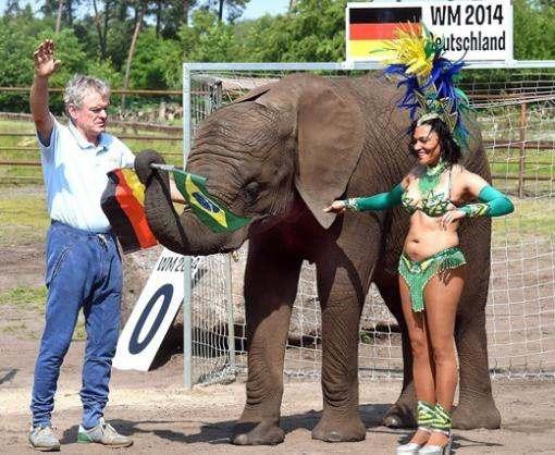 Евро-2016: немецкая слониха не согласилась с прогнозами морской львицы на матч Германия – Украина