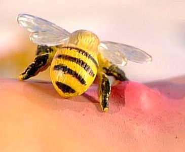 Осам и пчелам нравится резкий запах пота
