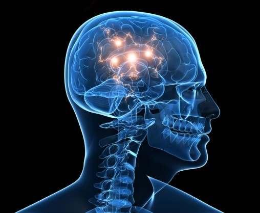Объяснена способность мозга к предвидению