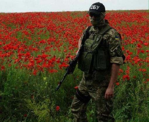 В Харьковской области обнаружена огромная плантация мака: фото-факты