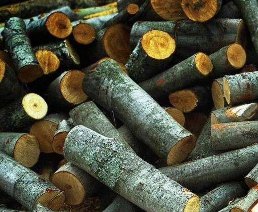 Готовь сани летом: крымские власти советуют населению начинать закупать дрова