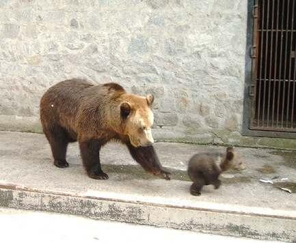 В Харькове закрывают зоопарк