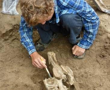 Под Харьковом археологи раскопали скифский курган