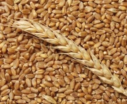 Украина побила рекорд экспорта зерна