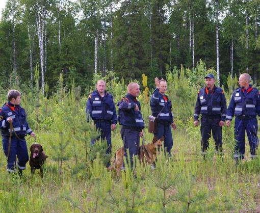 Полиция, Нацгвардия и активисты прочесывают лес в поисках опасных преступников: видео