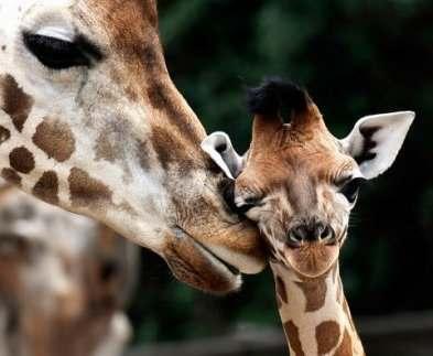 Харьковский зоопарк пополнится новыми обитателями