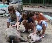Из харьковского зоопарка вывезут зверей