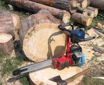 Под Харьковом браконьеры нарубили деревьев на семь миллионов