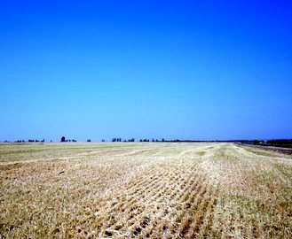 В Харьковской области ожидают один из лучших урожаев