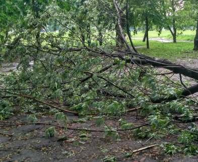 Буря в Харькове: повалена сотня деревьев