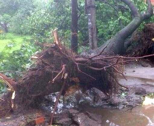 Ураган под Харьковом: мужчину привалило деревом