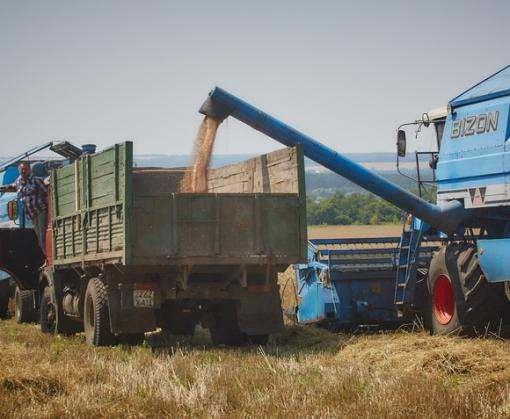 Аграрии Харьковщины убрали половину всех площадей озимых