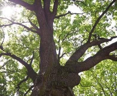 Деревья в саду Шевченко обещают посчитать до конца недели