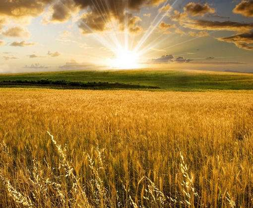 Прокуратура выявила почти 300 гектаров бесхозных полей